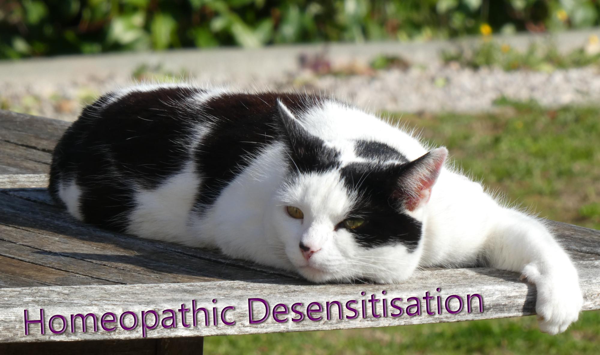 Homeopathic Desensitisation