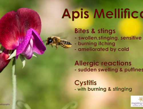 Homeopathic Apis Mellifica for Cystitis